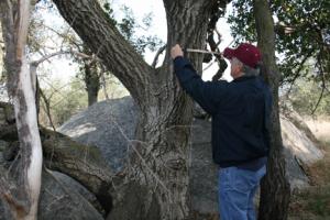 Fire Damage Assessment California